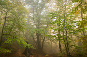 Autumn forest landscape in foggy day
