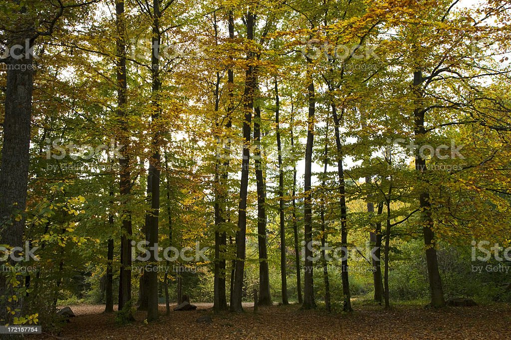 Autumn Forest Landscape royalty-free stock photo