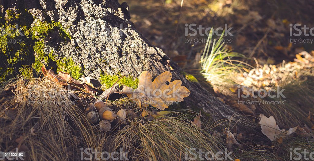 Autumn forest lawn. Indian summer in the woods stock photo