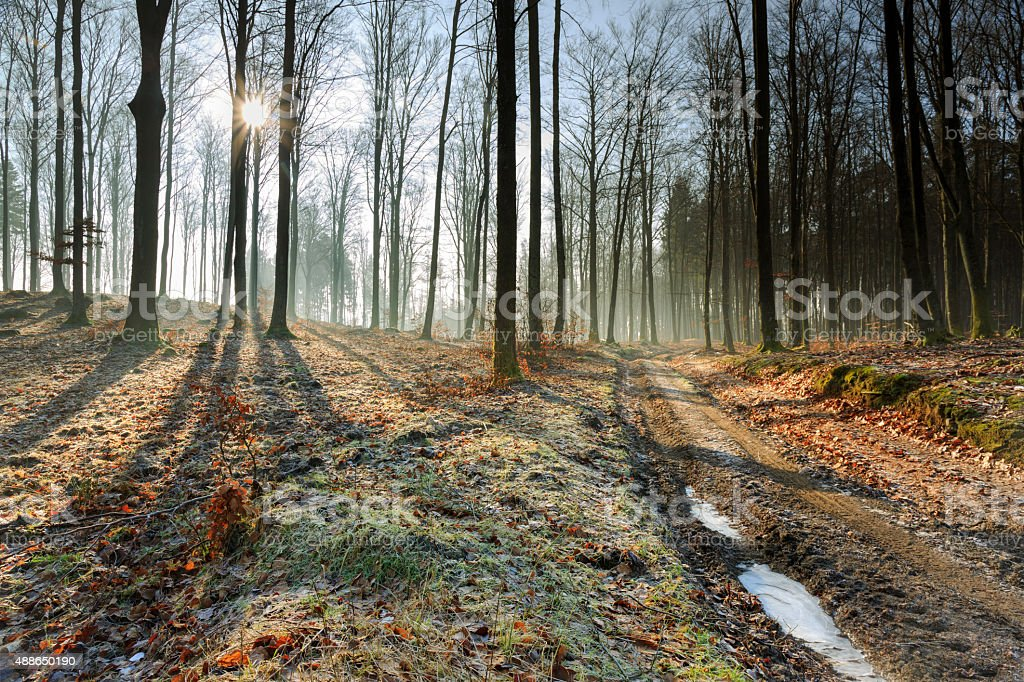 Autumn Forest Morning Frost And Fog Sun Rays Sunrise stock photo