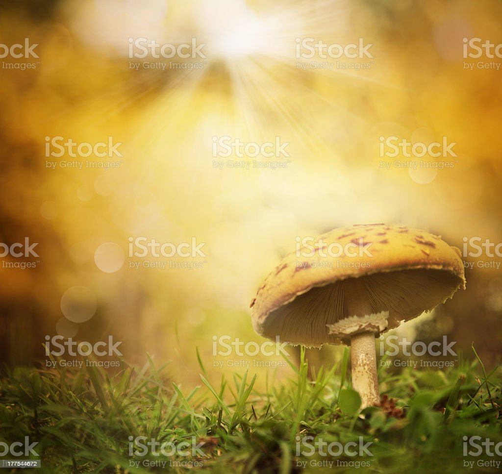 Autumn forest mushroom royalty-free stock photo