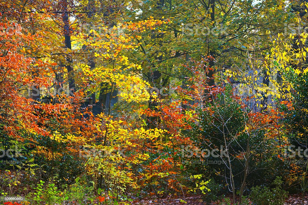 Autumn forest. Nachtegalenpark in Antwerp stock photo