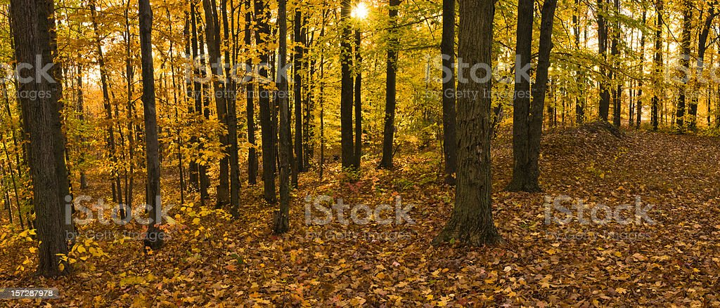 Autumn Forest Panorama stock photo