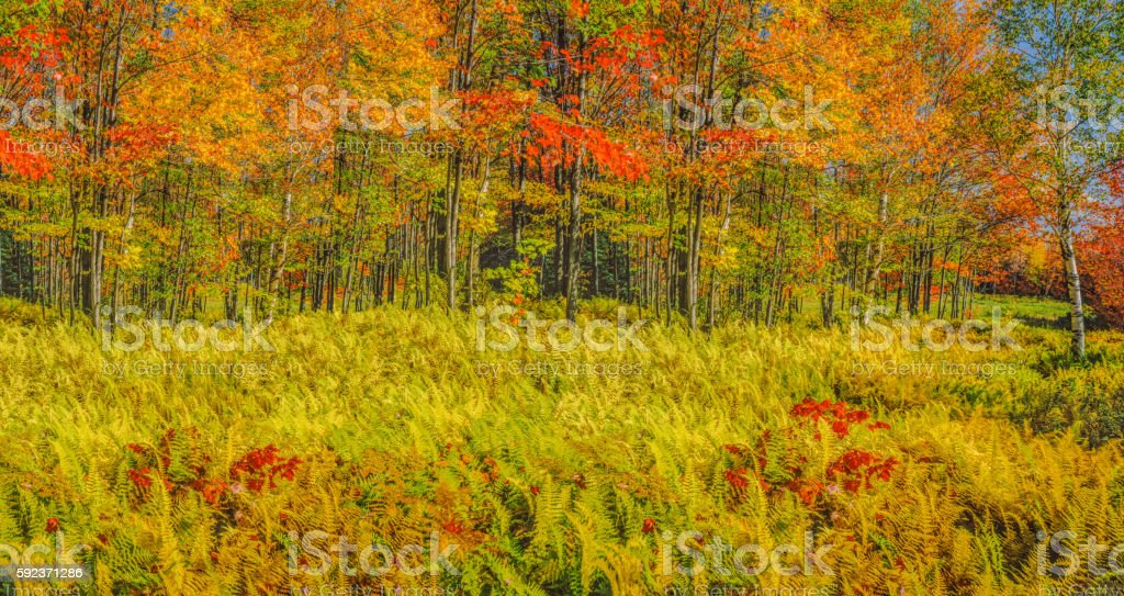 Autumn forest panoramic Green Mountains, Vermont stock photo