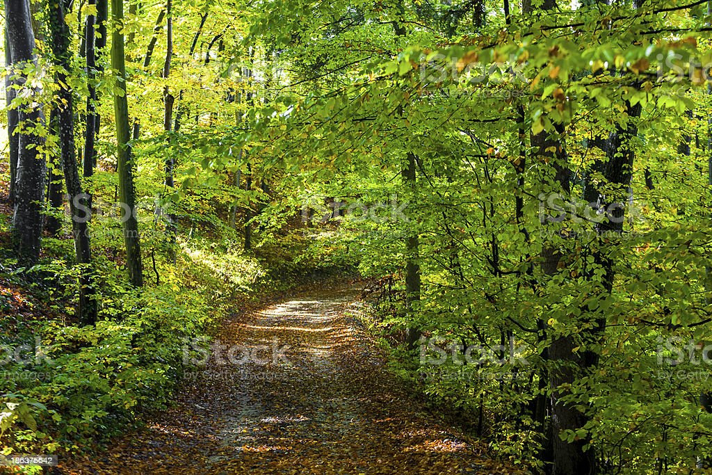 Autumn Forest path royalty-free stock photo