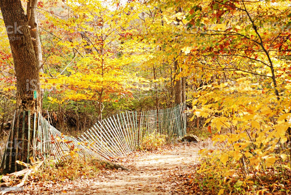 Autumn forest path with vibrant golden foliage stock photo