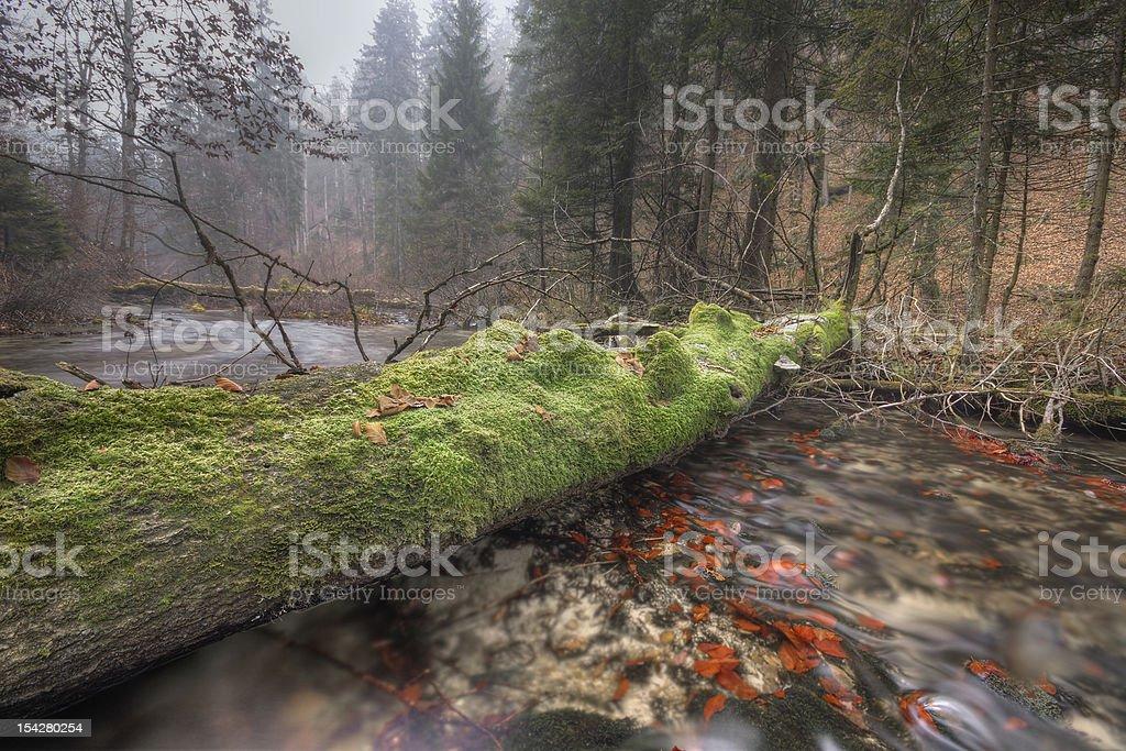 Floresta de outono foto royalty-free