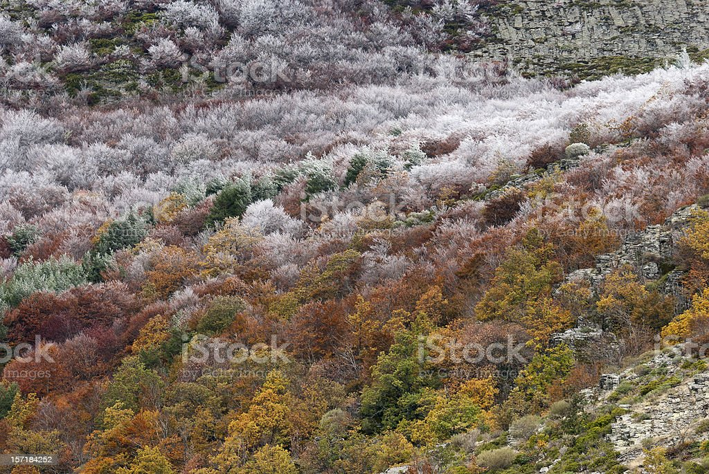 Bosque de otoño. - foto de stock