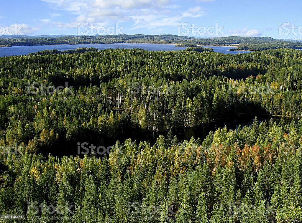 Autumn forest royalty-free stock photo