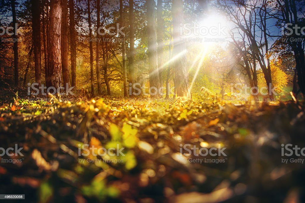 Autumn forest. stock photo