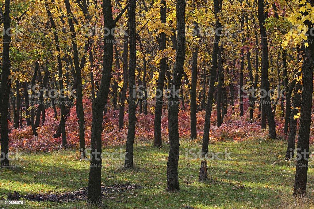 Bosque de otoño foto de stock libre de derechos
