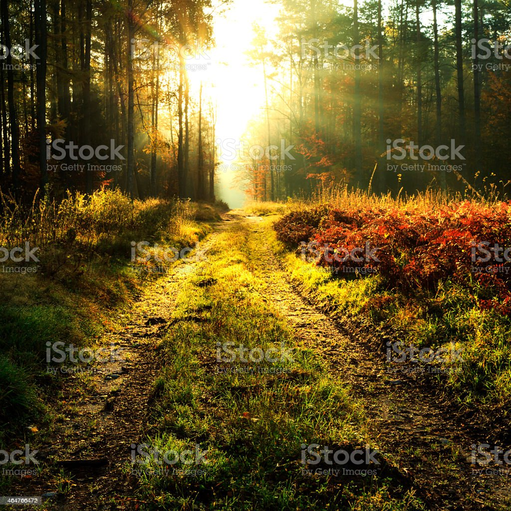 Autumn forest rays of light road stock photo