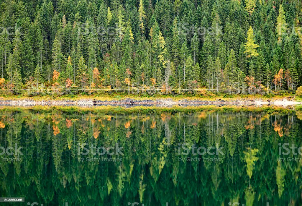 Autumn forest reflected in calm lake. Gosausee, Austria. stock photo