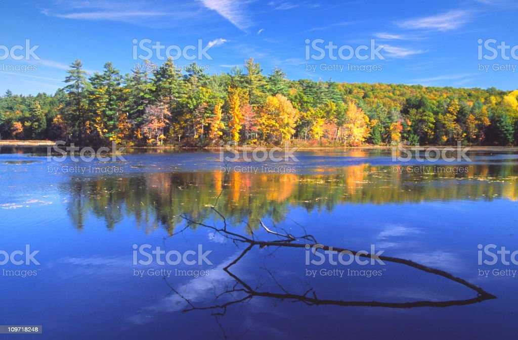 Autumn Forest Reflected on Pond royalty-free stock photo