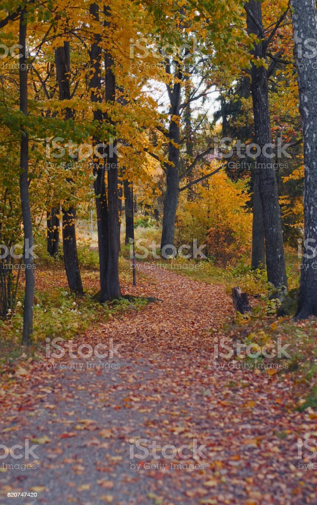 Autumn Forest Sweden stock photo