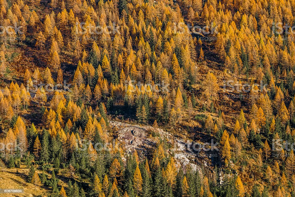 Autumn forest texture on the mountainside stock photo