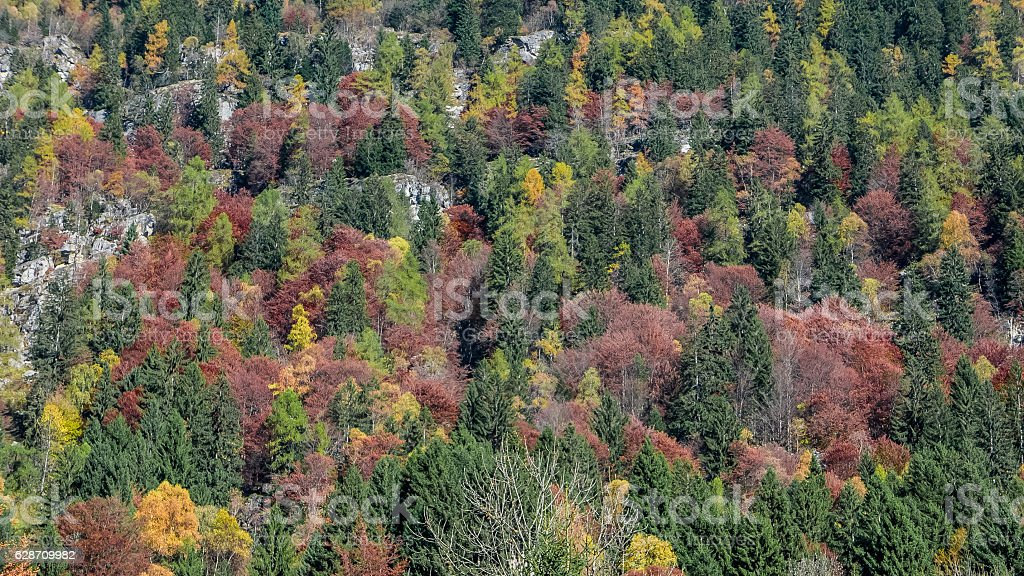 Autumn forest texture on the mountainside stock photo