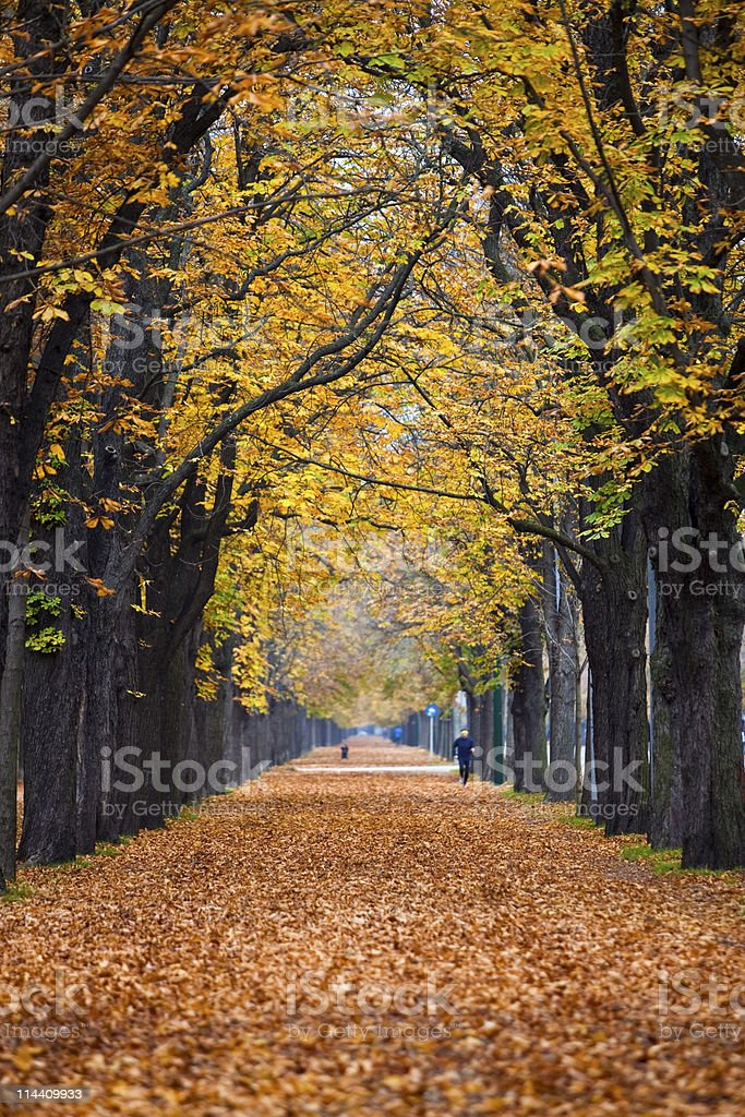 autumn forest trail / alley with jogger royalty-free stock photo