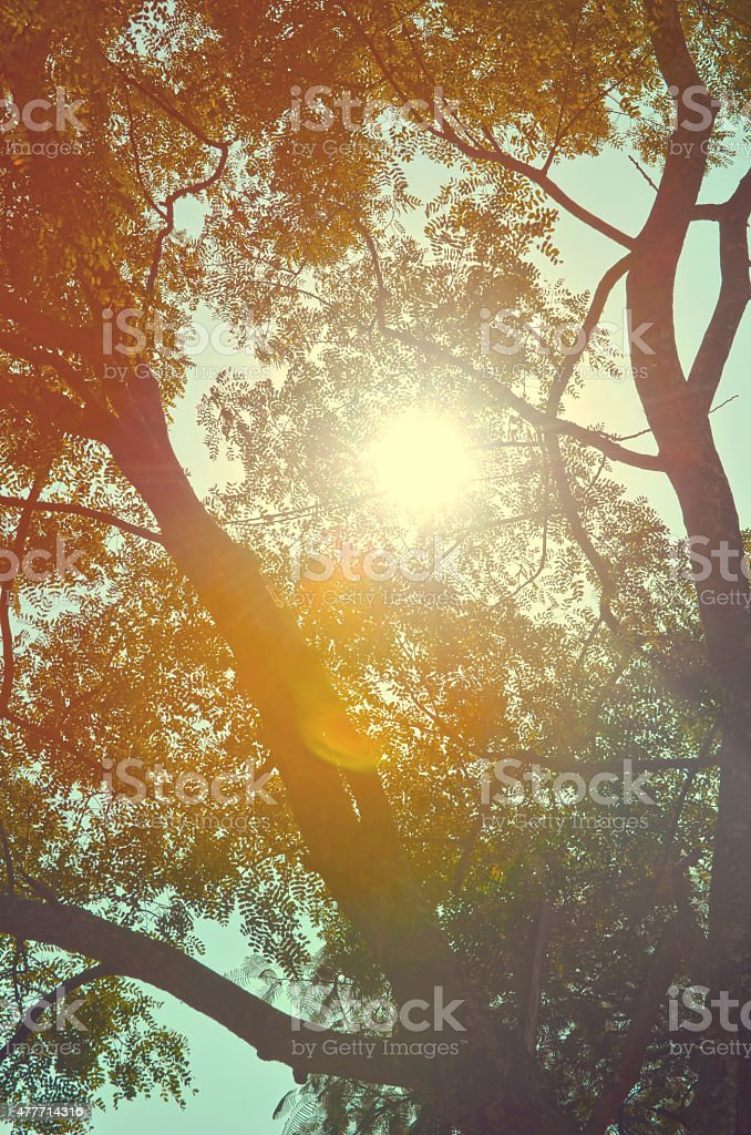 Autumn forest tree with sunset stock photo