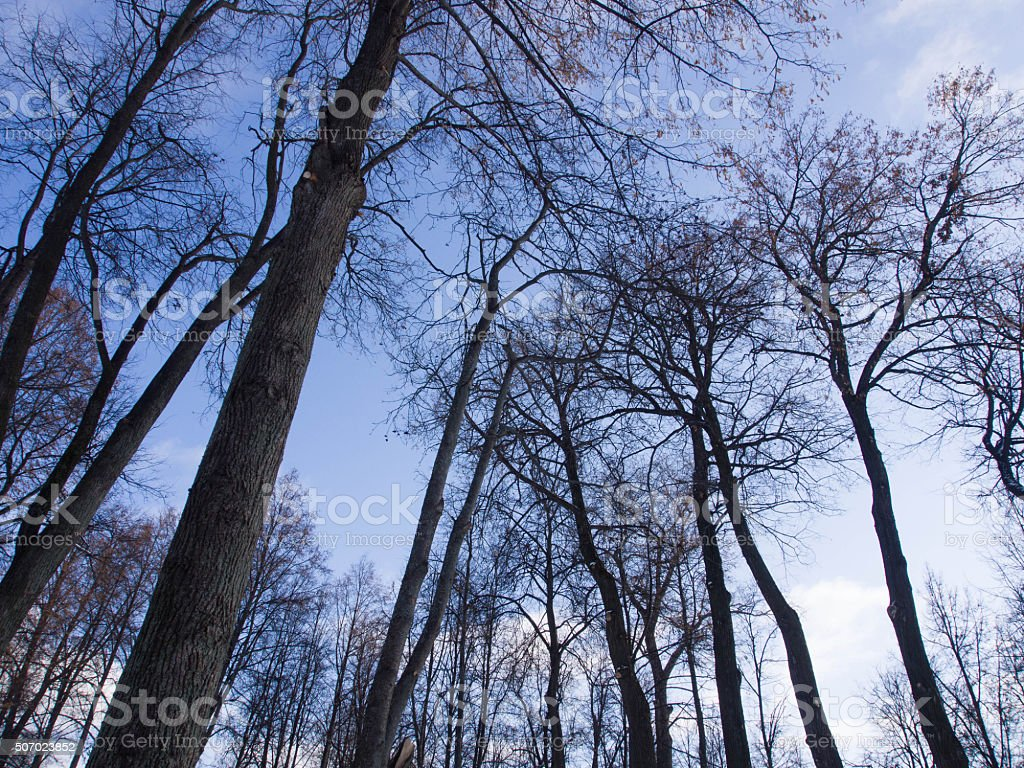 Autumn forest with blue sky stock photo