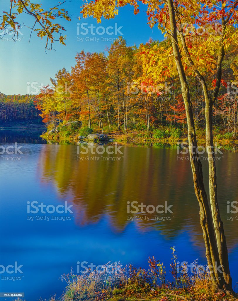 Autumn forest with pond reflections in West Virginia stock photo