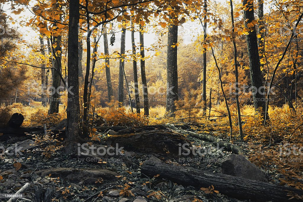 Autumn forest with sun shining stock photo