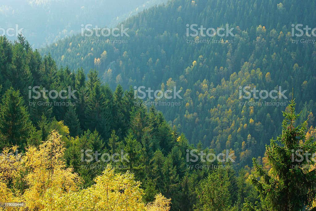 Autumn Forests II royalty-free stock photo