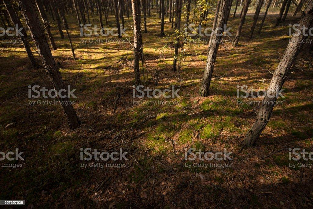 autumn forrest stock photo