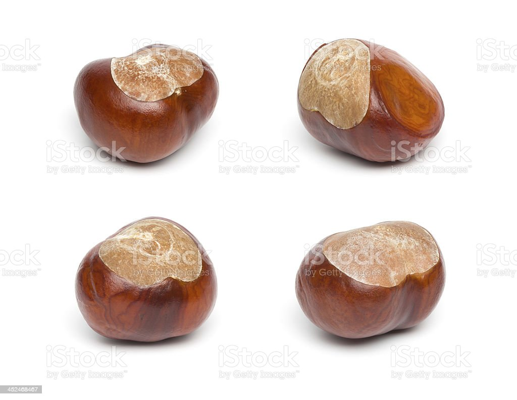 Autumn - Four Chestnuts Isolated on White stock photo