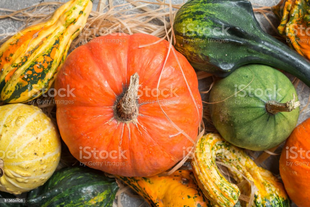 Autumn  frame from decorative Pumpkins stock photo