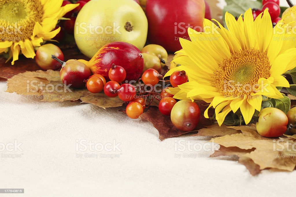 Autumn frame with fruits,pumpkins and sunflowers 003 royalty-free stock photo