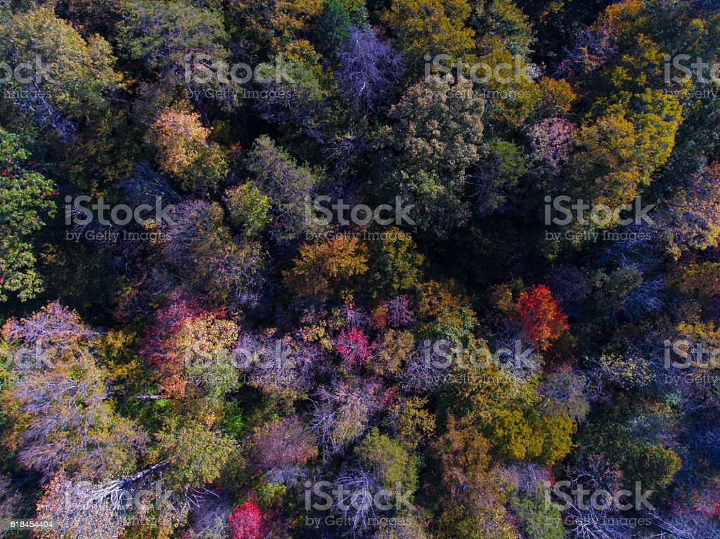 Autumn from Above stock photo