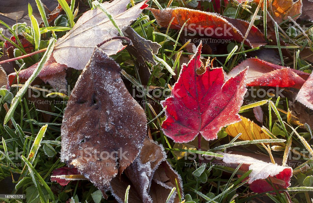 Autumn Frost royalty-free stock photo