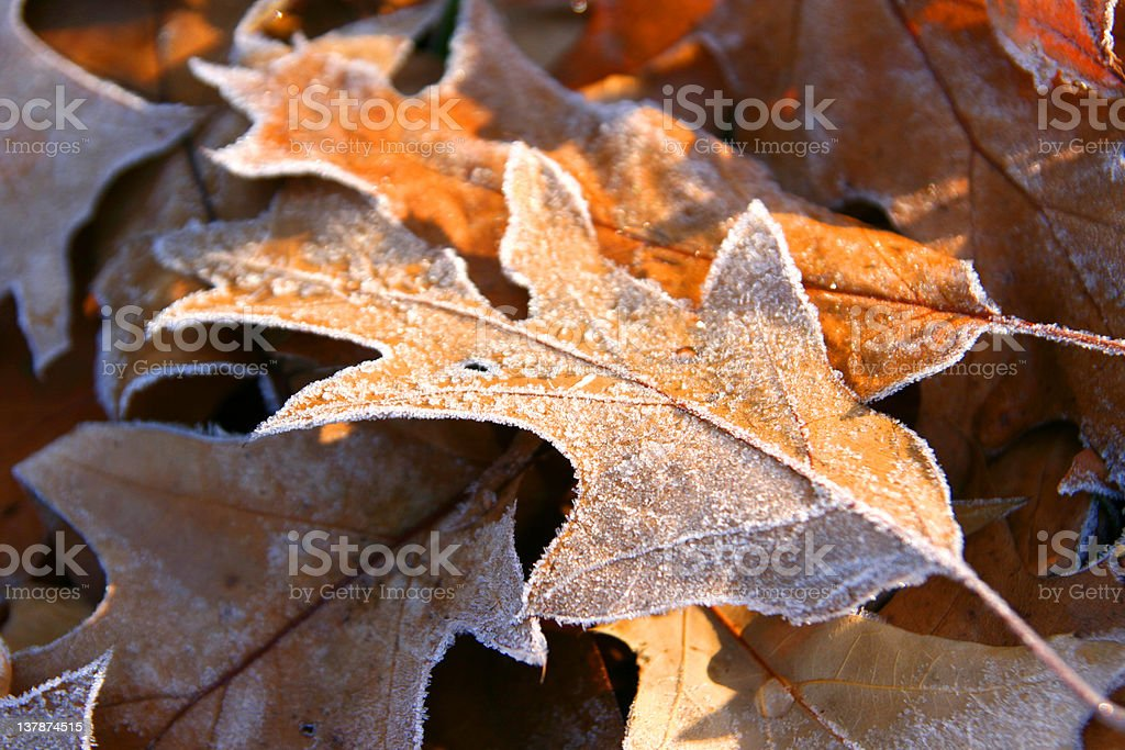 Autumn frozen leaves close up royalty-free stock photo