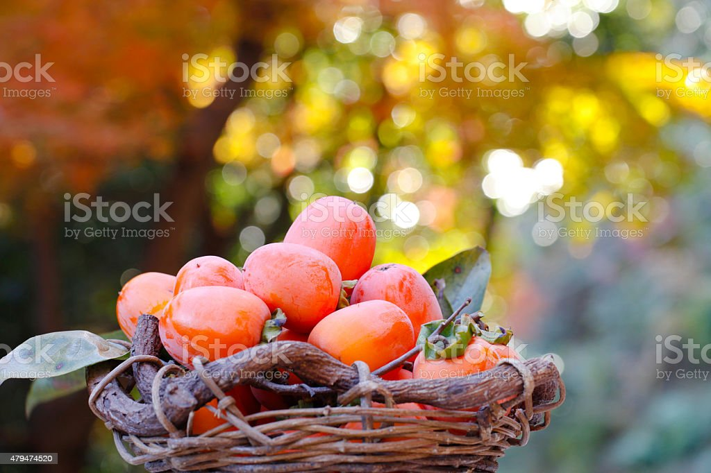 Autumn fruit stock photo