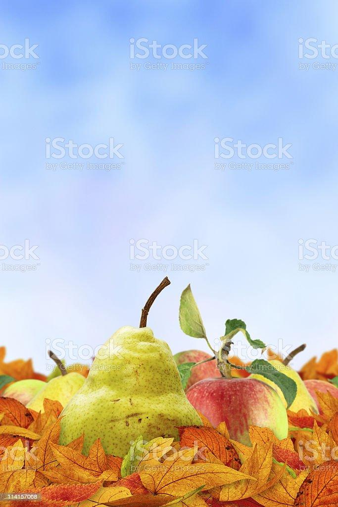 Autumn Fruits On Blue Background royalty-free stock photo