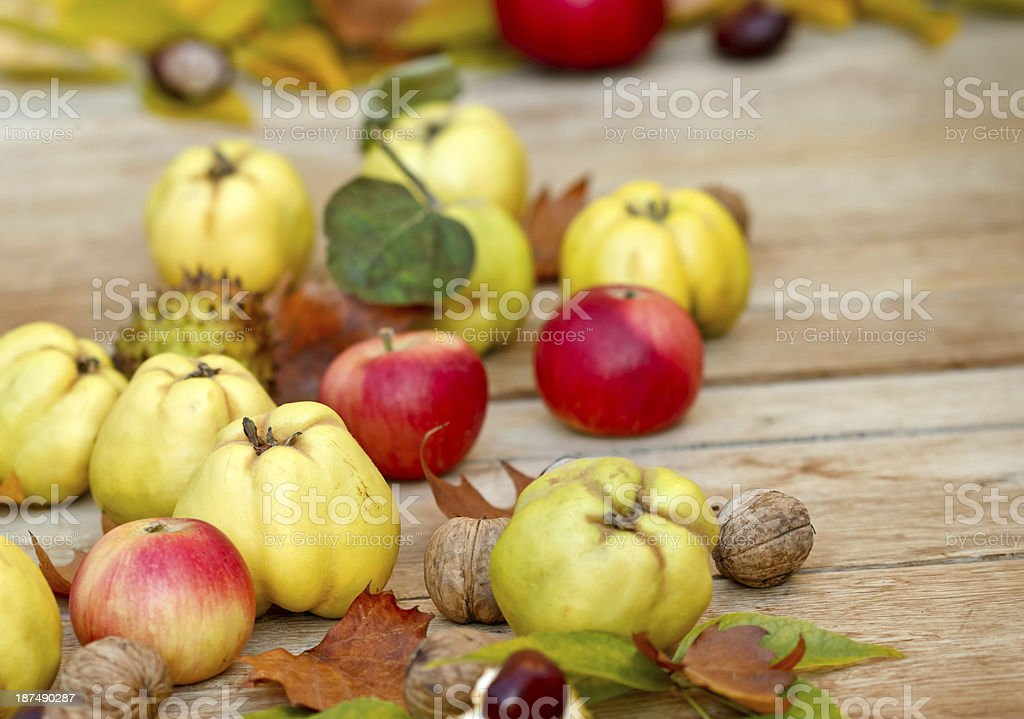 Autumn fruits - quinces royalty-free stock photo