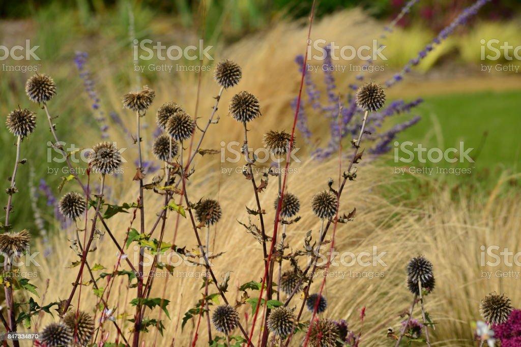 Autumn garden, Jersey, U.K. stock photo