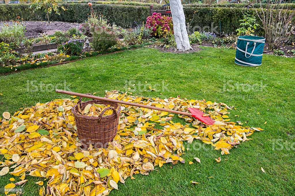 Autumn - Gardening stock photo