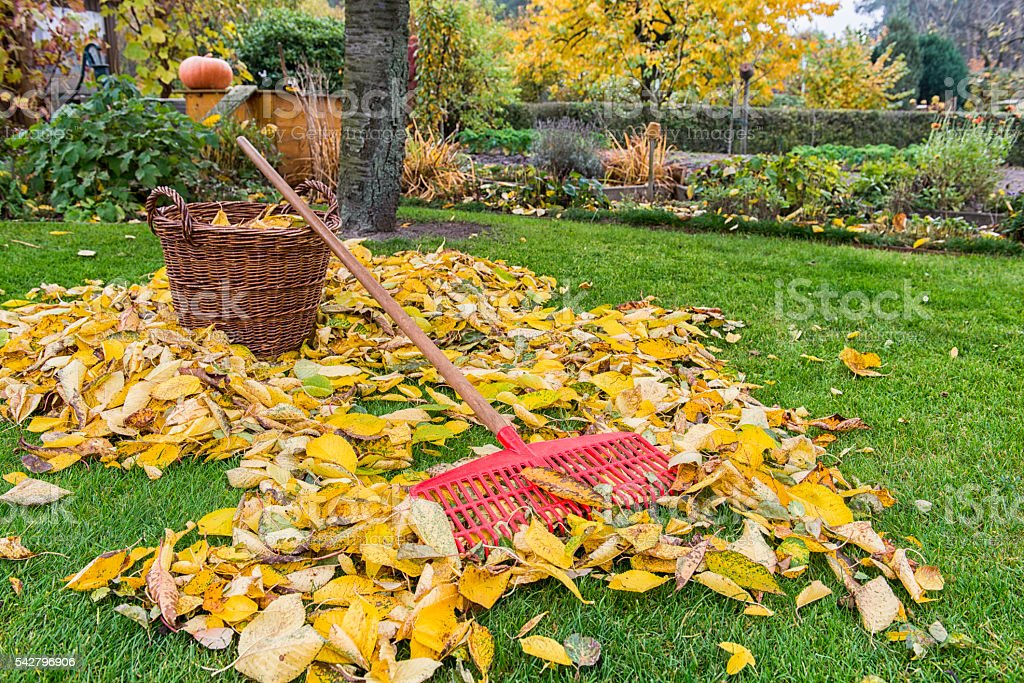 Autumn - Gardening stock photo