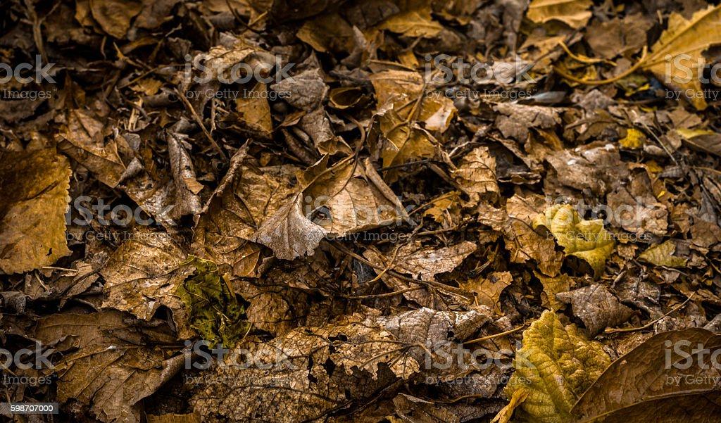 Autumn gold floor stock photo