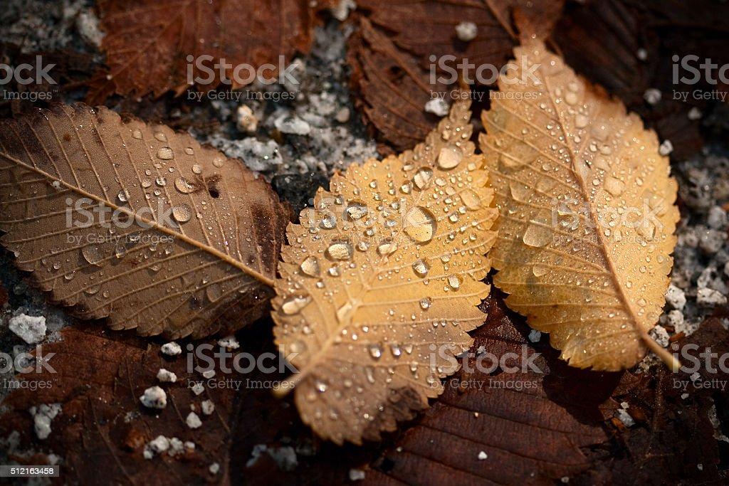Autumn Gold royalty-free stock photo