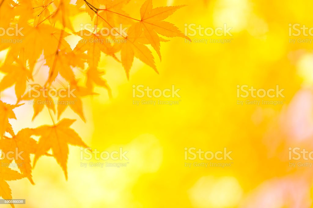 Autumn Golden Leaves stock photo