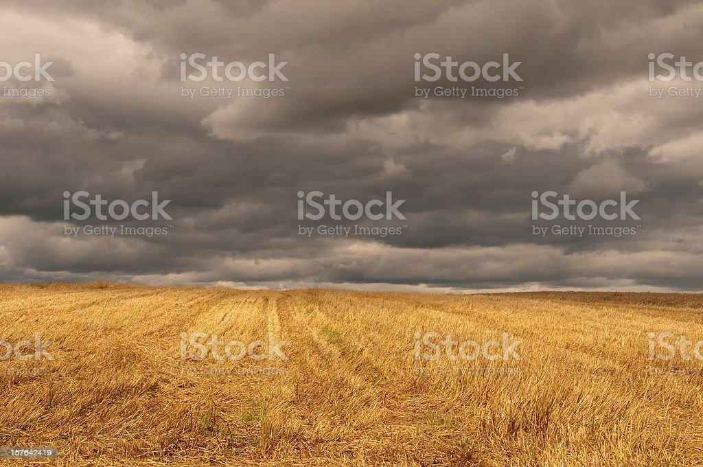 Autumn golden stubble field dark cloudy stormy sky stock photo