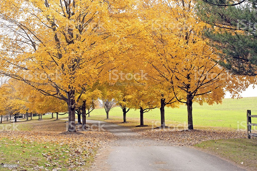 Autumn Golden Trees royalty-free stock photo