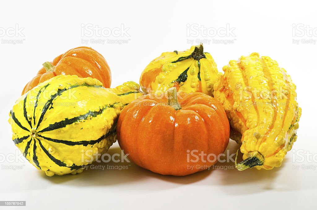 Autumn gourds and miniature pumpkins royalty-free stock photo