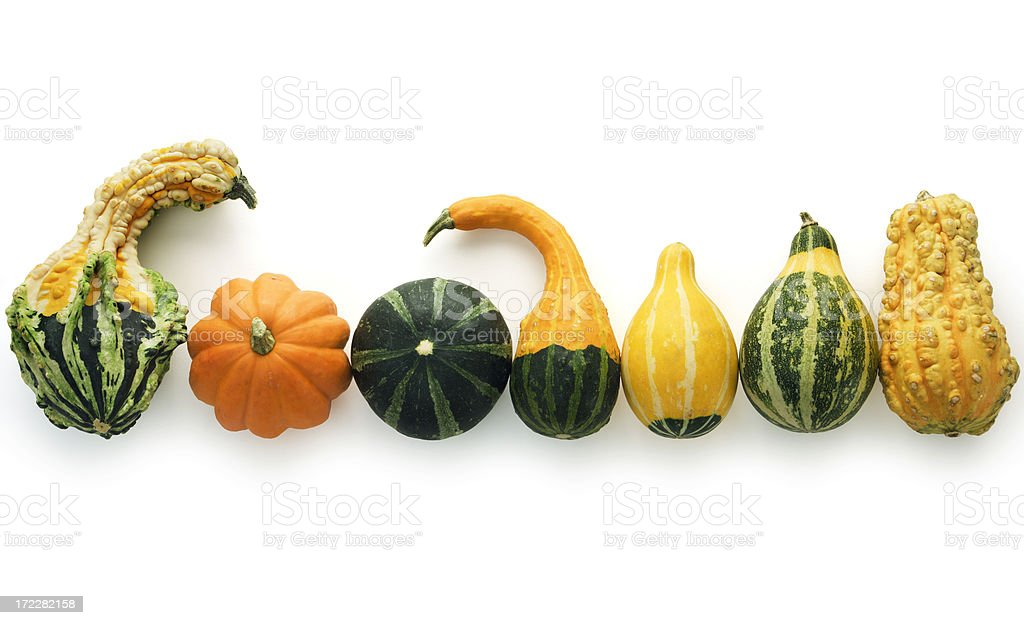 Autumn Gourds Isolated royalty-free stock photo