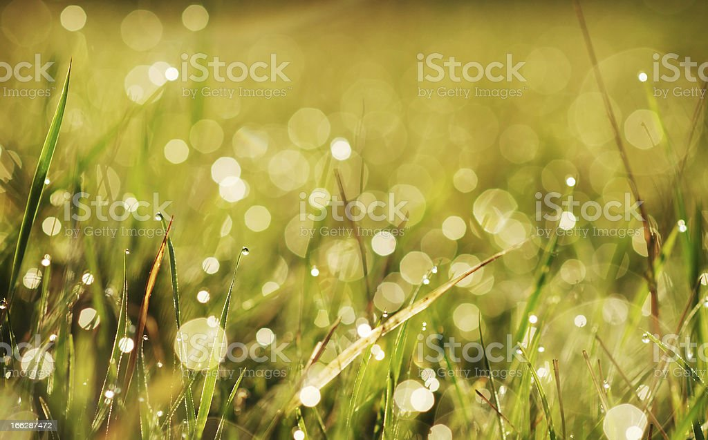 autumn grass with dew stock photo