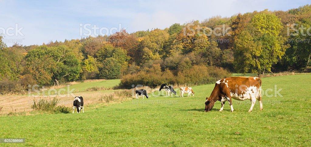 Autumn grazing stock photo