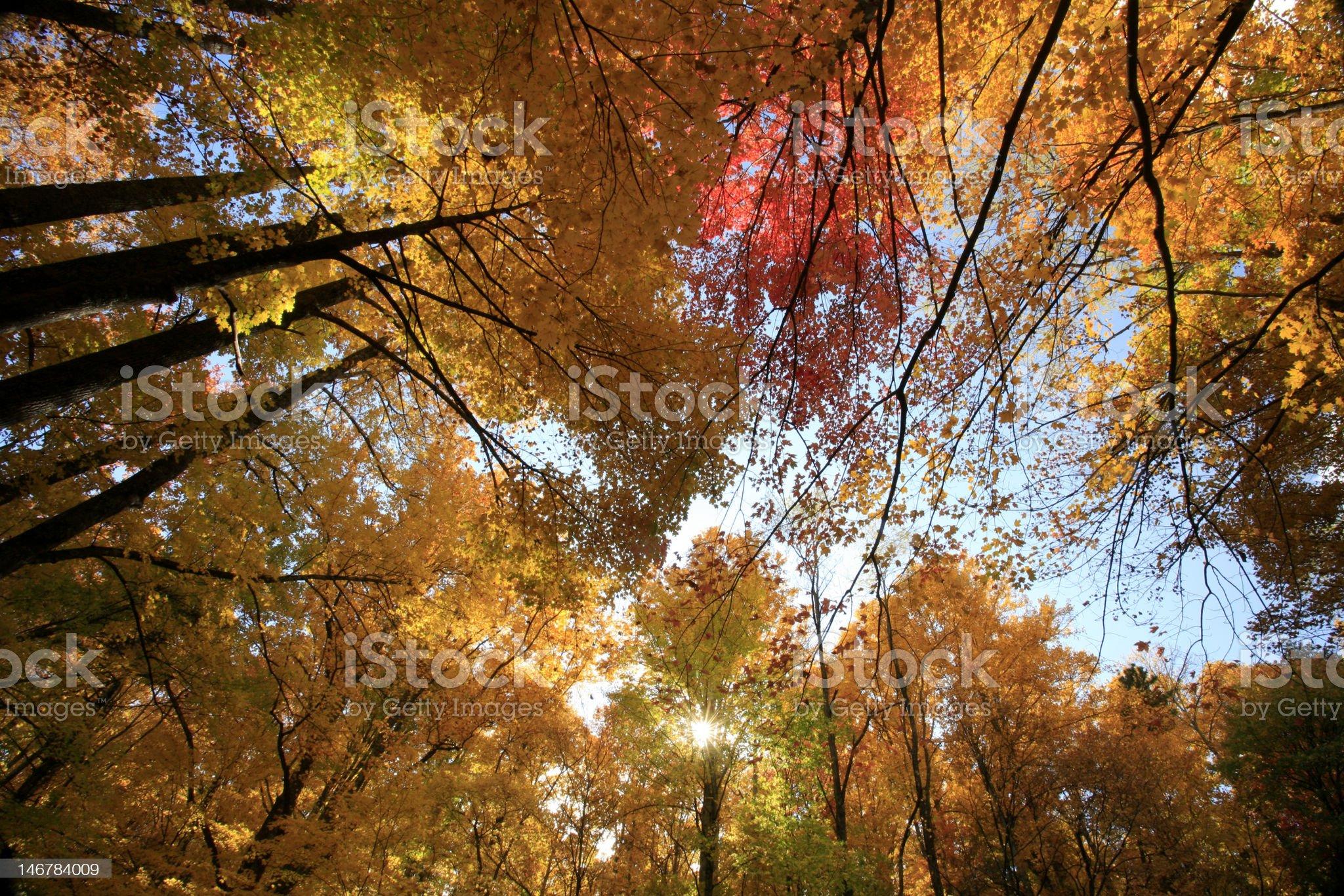 autumn, great smoky mountains royalty-free stock photo